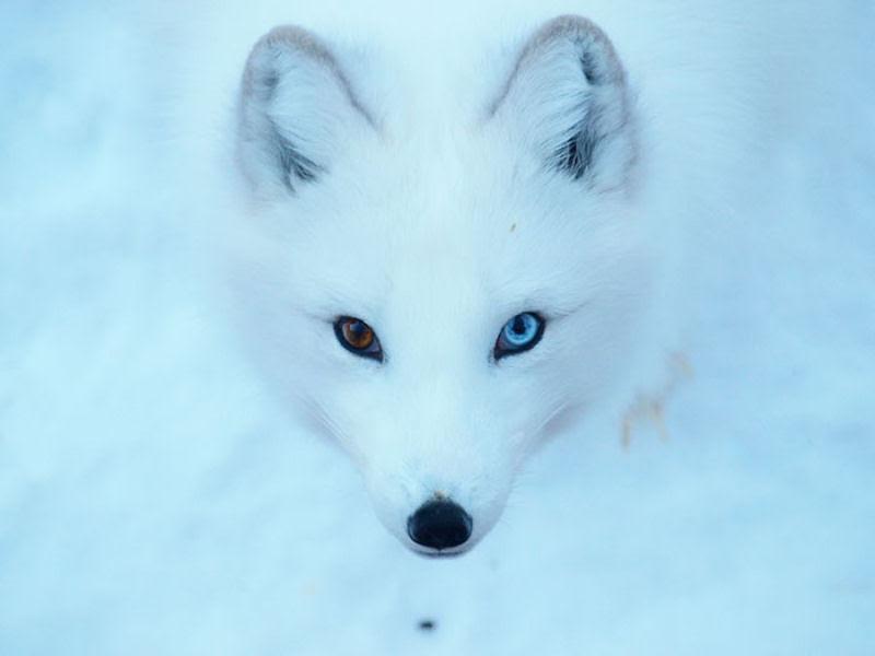 20 animais extraordinariamente belos com olhos ímpares 06