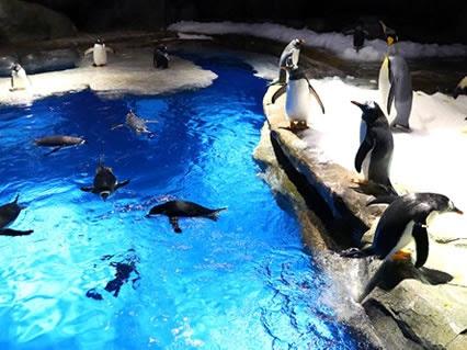 海洋公園大肆宣傳小企鵝出生 實為保育反面教材