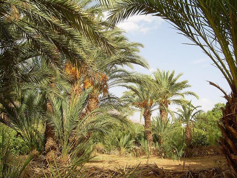 File:Oases, Maghreb.JPG