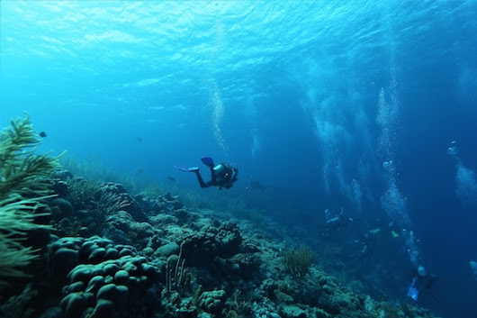 Awesome Cruises for Scuba Divers