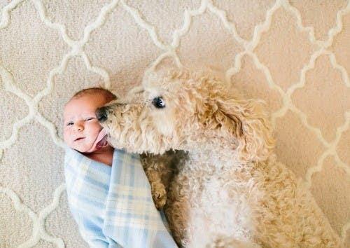 bebes y perros16