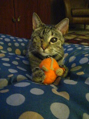Maggie gets Orange Mouse on the tuffet