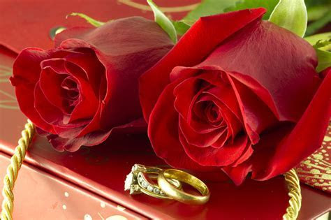 red roses and wedding rings on Gift box   PHOTOBER   Free