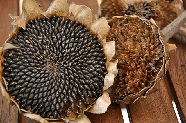 MONTESSORI BOTANY : Types of Dry Fruits ~ Pinegreenwoods