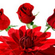 FTD Florist Flower and Gift Delivery  Dundas Flowers London, ON, N6B 1W1