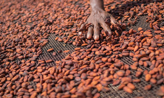 Why Barry Callebaut's model for sustainable growth is a lesson for us all