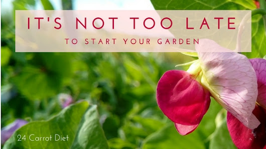 Summer is Here All Too Soon! Is it Too Late to Plant Seeds in My Garden?