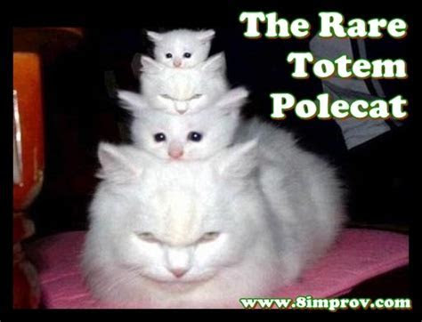 Funny Cat Pic   Funny Stuff online   Pinterest   Totems