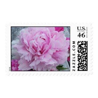 Wedding Stamps Pink Peonies Flowers Postage stamp