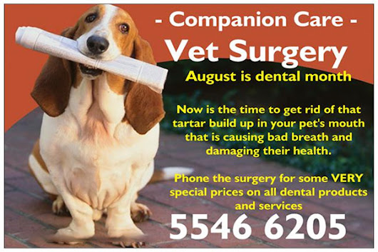 August is Dental Month - Ormeau Veterinary Surgery - Companion Care