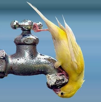Bird upside down trying to tap into a drinking water