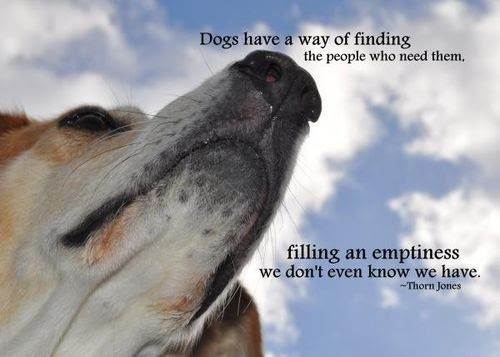 Dog Death Quote Quote Number 694597 Picture Quotes
