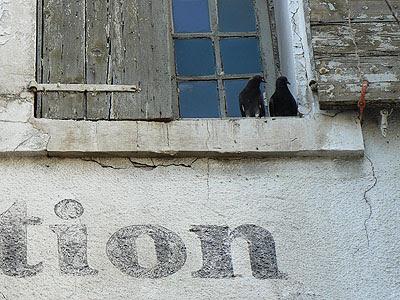 pigeons à l'isle sur la sorgue.jpg