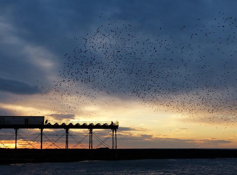 29151 - Starling Murmuration, Aberystwyth Pier