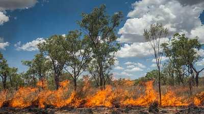 Afbeeldingsresultaat voor verbranding oerwoud borneo