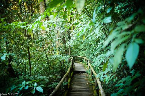 Jungle by Jean-Fabien - photo & life™
