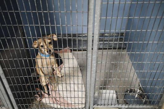 The no-kill dilemma: Can Las Vegas save all its shelter animals?
