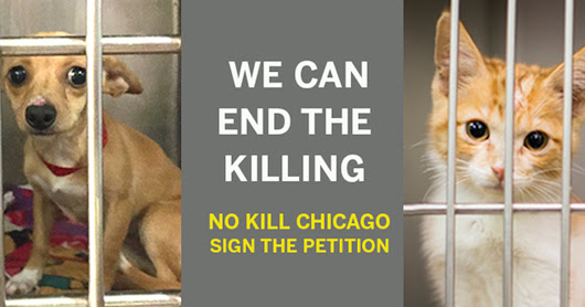 Help Build a No Kill Chicago