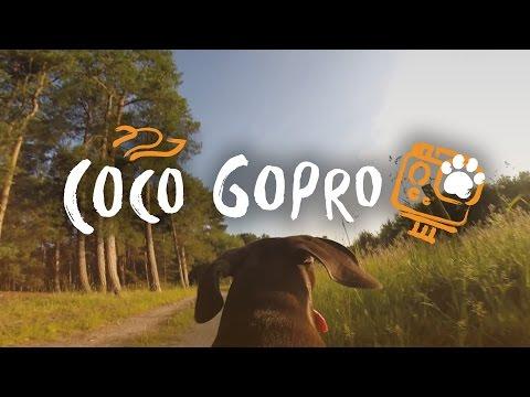 Canicross GoPro on Dog