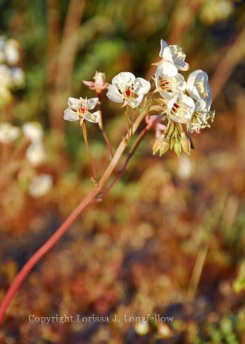 Wild-Bloom-09