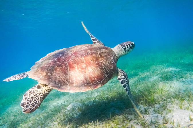 red-sea-snorkeling-in-hurghada-141687