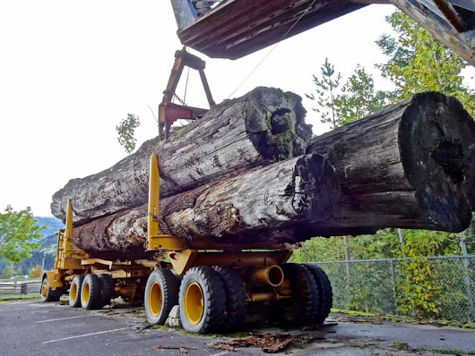 Trump inauguration brings worries for Forestry