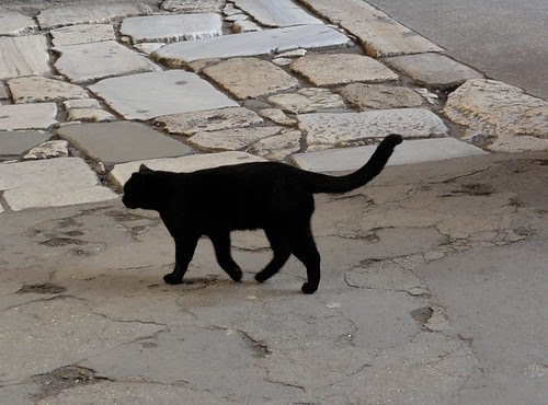Cat in the Colosseum
