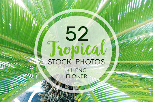 Tropical Stock Photos by ilonitta | Design Bundles