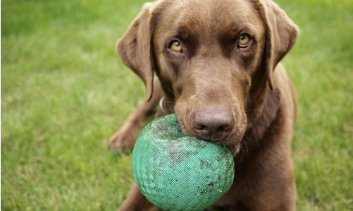 The 10 Most Common Items Dogs Choke On