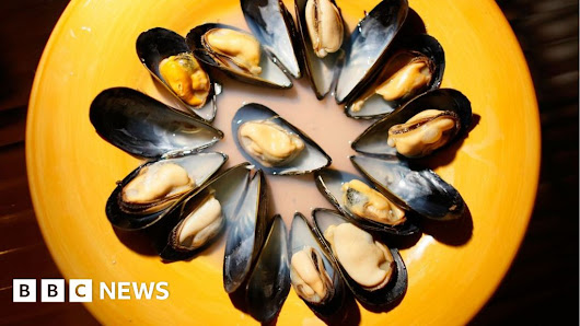 Opioids discovered in Seattle mussels