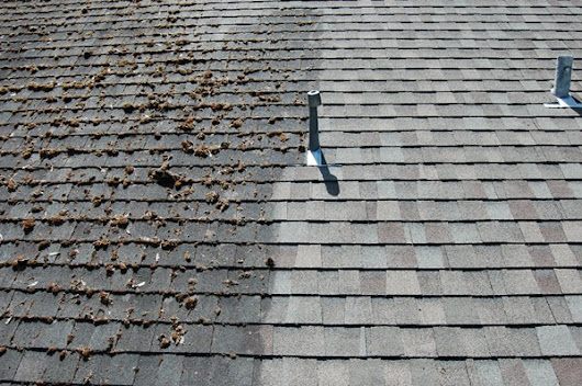 HOW TO: Clean Roof Shingles the Natural Way - POCO Building Supplies