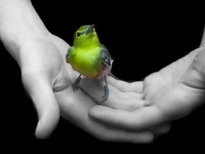 http://taicarmen.files.wordpress.com/2011/07/freedom_yellow_bird_in_hands.jpg
