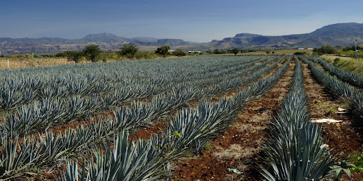 22 Photos of Tequila, Jalisco That Will Have You Thirsting for a Visit