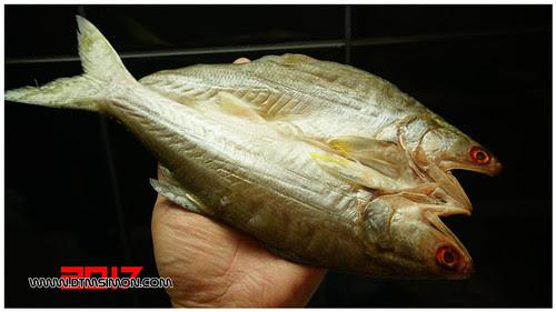 午魚10.jpg