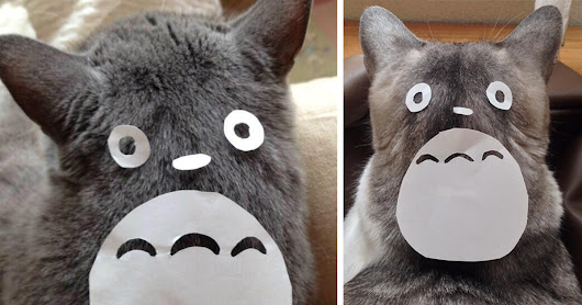 Cat Owners In Japan Are Turning Their Pets Into Totoro