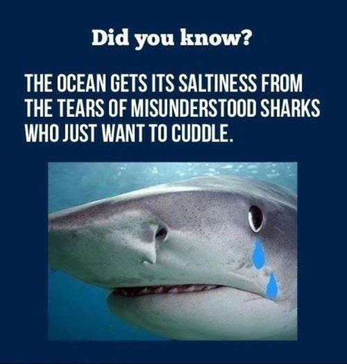 funny shark week, funny shark, shark week, ocean tears of sharks, misunderstood sharks, shark week comic