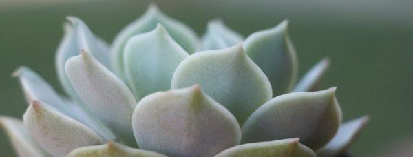tips-para-cultivar-suculentas-saludables-01