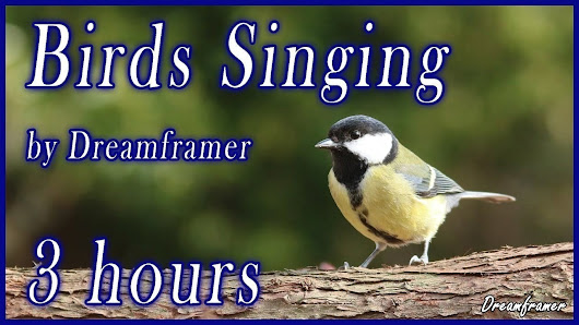 Birds Singing - Relaxing Nature Sounds - Dreamframer Photography