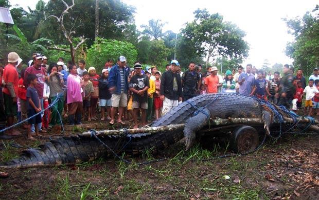 Em setembro de 2011, um crocodilo de mais de 6 metros e uma tonelada foi capturado em Bunawan, nas Filipinas. (Foto: Reuters)