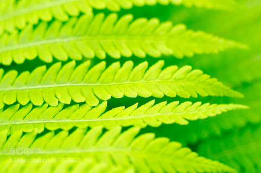 Leaf of fern