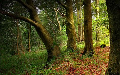 wallpaper bosque magico ubuntu libre