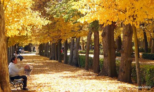 El tiempo por s mismo 1 de noviembre jardines de aranjuez for Jardines de aranjuez horario