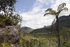 Chapada Diamantina, Brazil (Pterodactylus69) Tags: brazil fern brasil landscape brasilien bahia bromeliad landschaft farn treefern chapadadiamantina lencois baumfarn bromelie