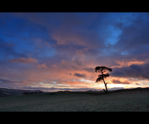 Lone Pine  II by Mike Bolam
