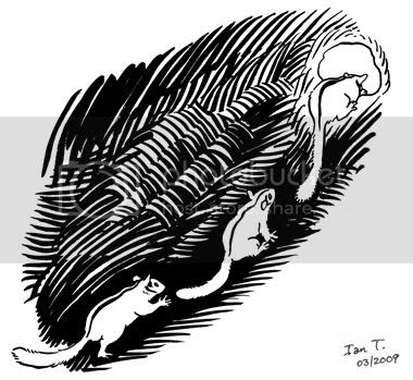 The Last Leadbeater's Possum panel by Ian T.