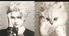 Famous Album Covers Recreated as Cat Photos