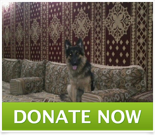 Click here to support Save dog's heart in Middle East  by Mohamed Samir