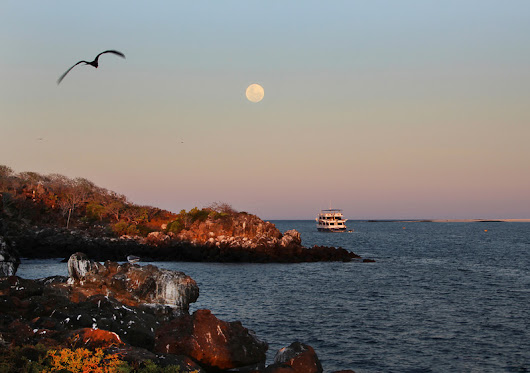 Images of the Galapagos Islands, In Darwin's Footsteps - Joanne DiBona