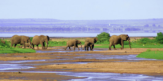 8 days safari tarangire, Lake Manyara, ngorongoro crater, Serengeti