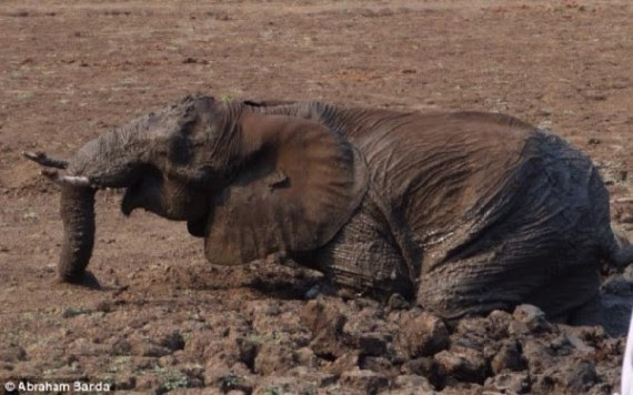 Mom starts to yell out for her baby as she is pulled from the mud.